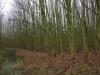 Bos van Boer Koome