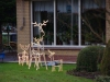 Rudolf voor de arrenslee is populair